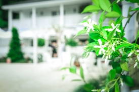 Spring jasmine blooming at Little Point Clear Venue, located in Point Clear, AL - photographed by Jenni Guerry Photography